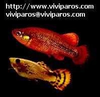 http://www.viviparos.com/